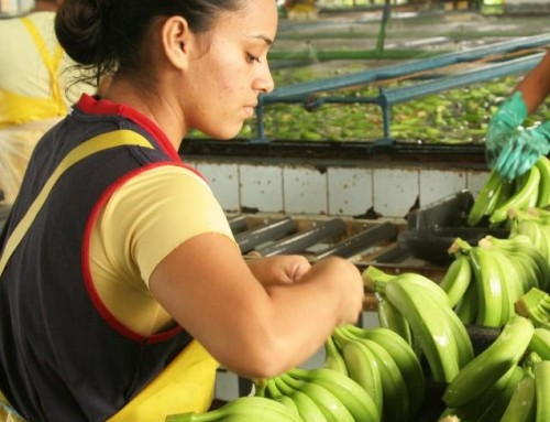 Rainforest Alliance y UTZ se fusionan