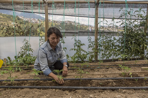 Sustainable Agriculture with Gender Inclusion and Participation in Quito